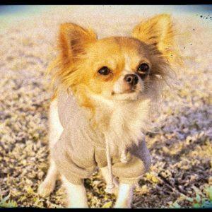 Boutique de vêtements pour Chihuahua