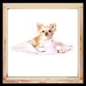 Couverture rose pour Chihuahua