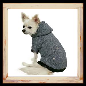 Pull gris pour Chihuahua avec capuche