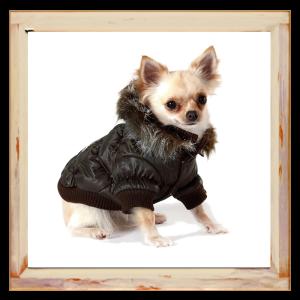 Doudoune chaude pour Chihuahua